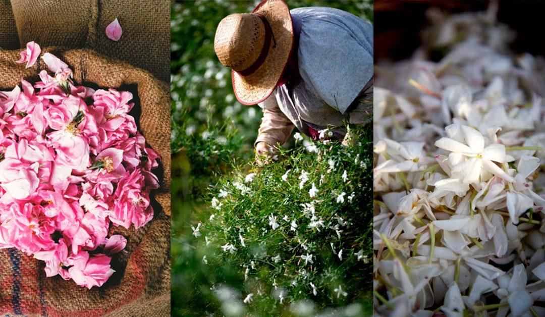 Parfümkészítő workshop kizárólag természetes alapanyagokból